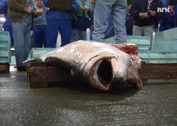 Fisk på land