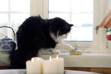 Fra Åsmund Nesse-video