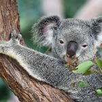 Why We Supported Replanting in Australia
