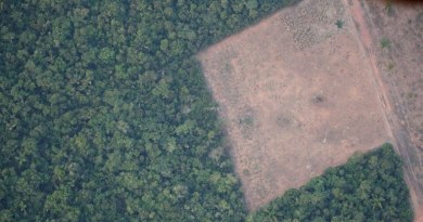 desmatamento amazonia 08062021172237486 Vision Art NEWS