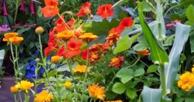 13 ideias para criar um jardim sensorial casacombr gardeningetc 16 Vision Art NEWS
