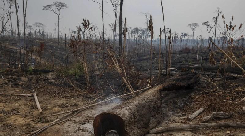 Emissões do Brasil ficam distorcidas sem contar degradação da Amazônia – 27/10/2021 – Ambiente