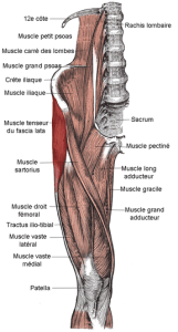 How can you relax fascia and decrease pain? - what is fascia