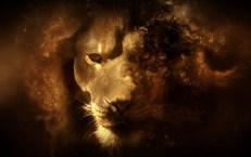 Beautiful-Lion-Wallpaper