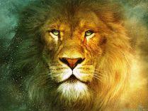 beautiful-lion-wallpapers