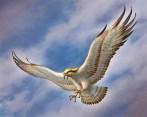 eagle-in-flight-250811