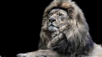 lion-desktop-wallpaper_015820142_22
