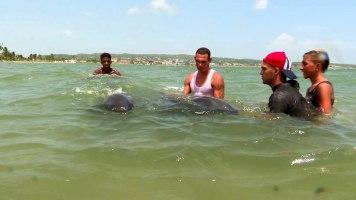 delfines-matanzas6