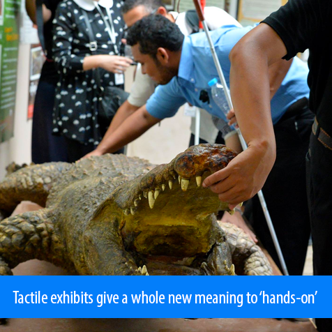 Tactile exhibits give a whole new meaning to 'hands-ono'.Image: Students feel the teeth and body textures of a stuffed crocodile.