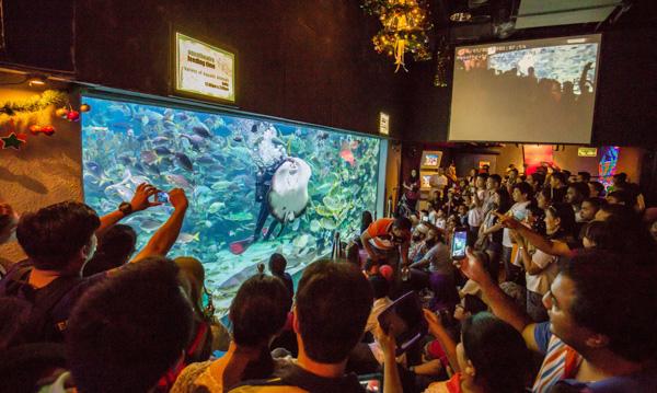 吉隆坡水族馆潜水员喂食