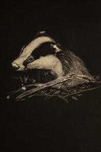 Badger by David Element (@davidelement1)