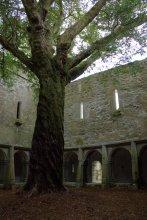 16. Muckross Abbey, Kerry, Ireland
