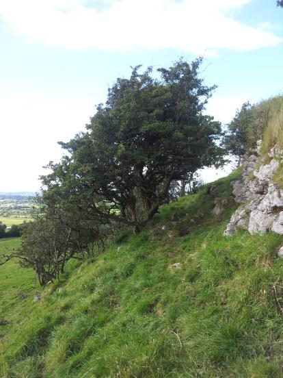 06. Knockastia, Co. Westmeath
