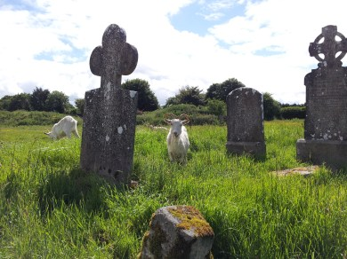 13. Old Downings Church, Co. Kildare