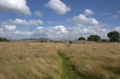 25. Rathgall Hillfort, Co. Wicklow