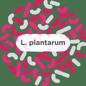 blog l plantarum 298x300 1