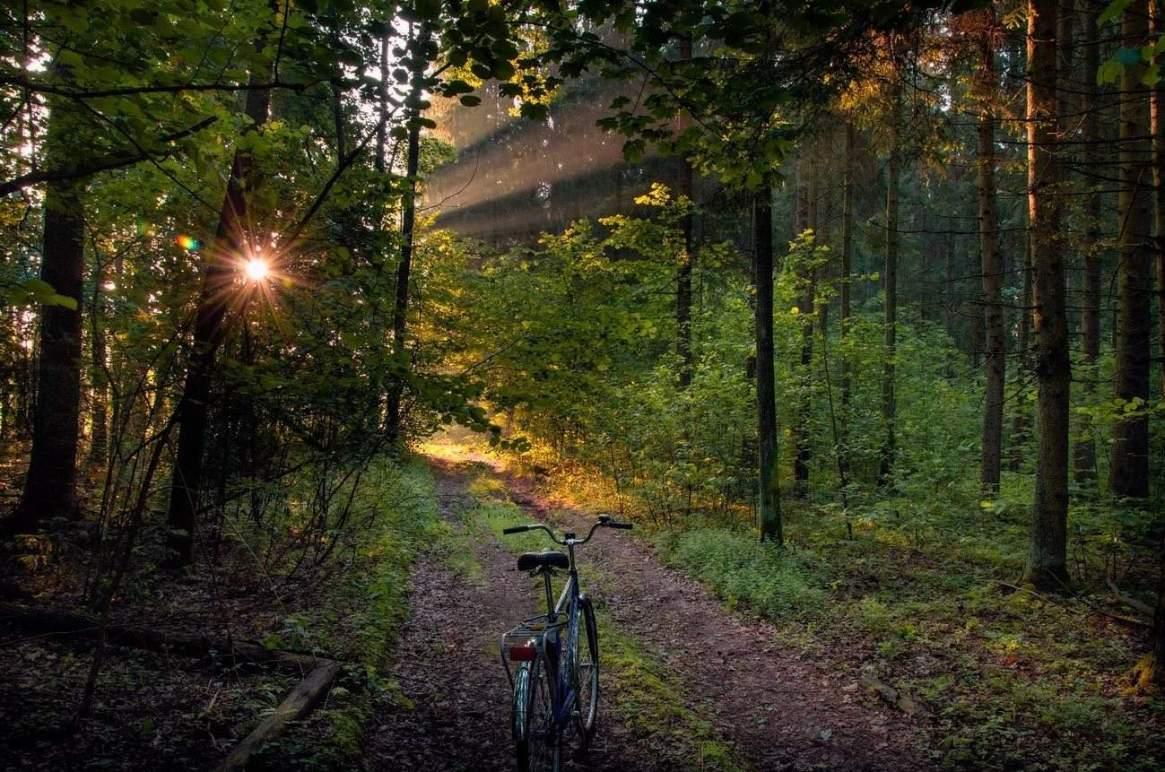 Велосипед на лесной тропе. Дикая природа Беларуси