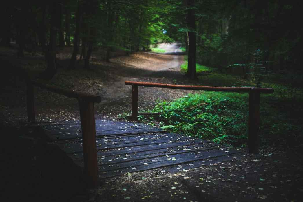 forest path, bridge in the forest