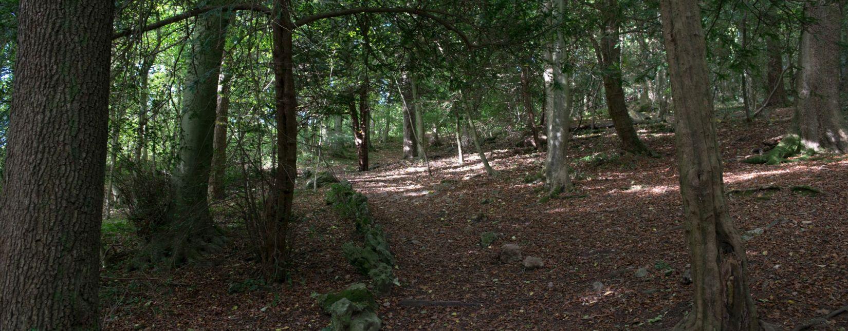 Explore Serpentine Woods in Kendal