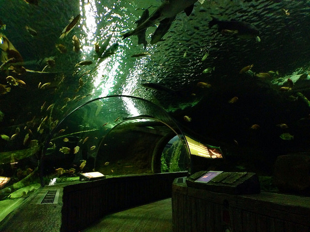 "Underwater Tunnel at Sea Life Aquarium, Mall of America. Image by <a href=""https://flic.kr/p/siR6FX"" target=""_blank""> NHN_2009</a>"