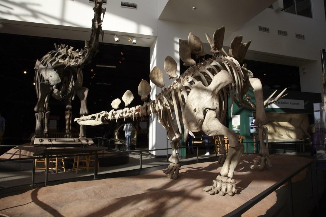 Science Museum of Minnesota Dinosaur Exhibit