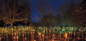 One of artist Bruce Munro's light display installations at the Minnesota Landscape Arboretum.