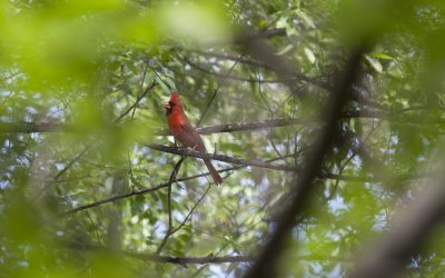 Best Birding Locations in the Twin Cities
