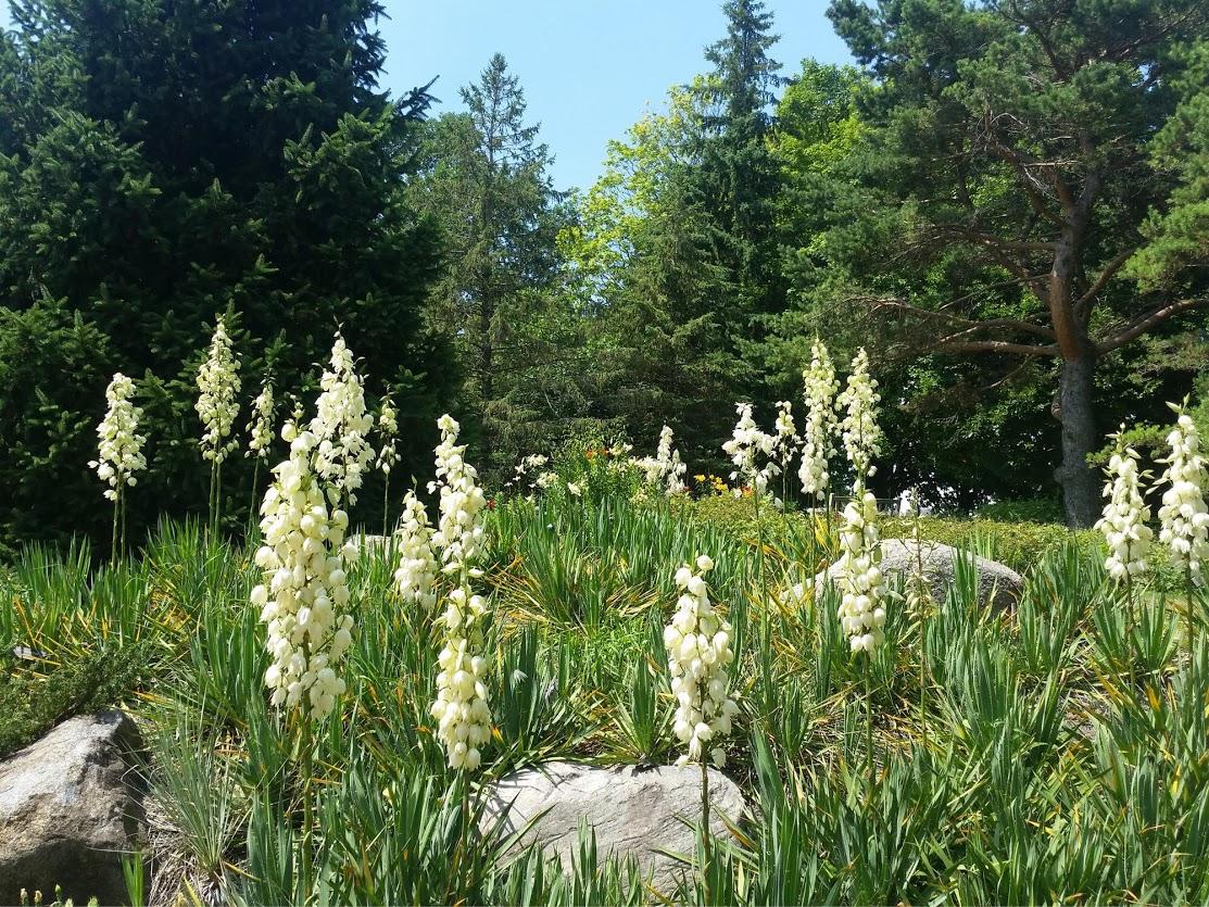 Fields of flowers at the Minnesota Arboretum.