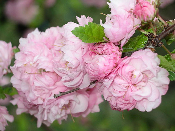 Some flowers in prolific bloom in the Lutz Railroad Garden.