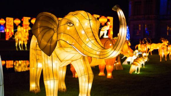 Lantern-Light-Elephants-1