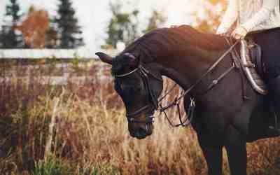 5 Horseback Riding Hotspots