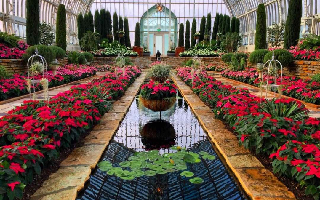 Holiday Flower Show