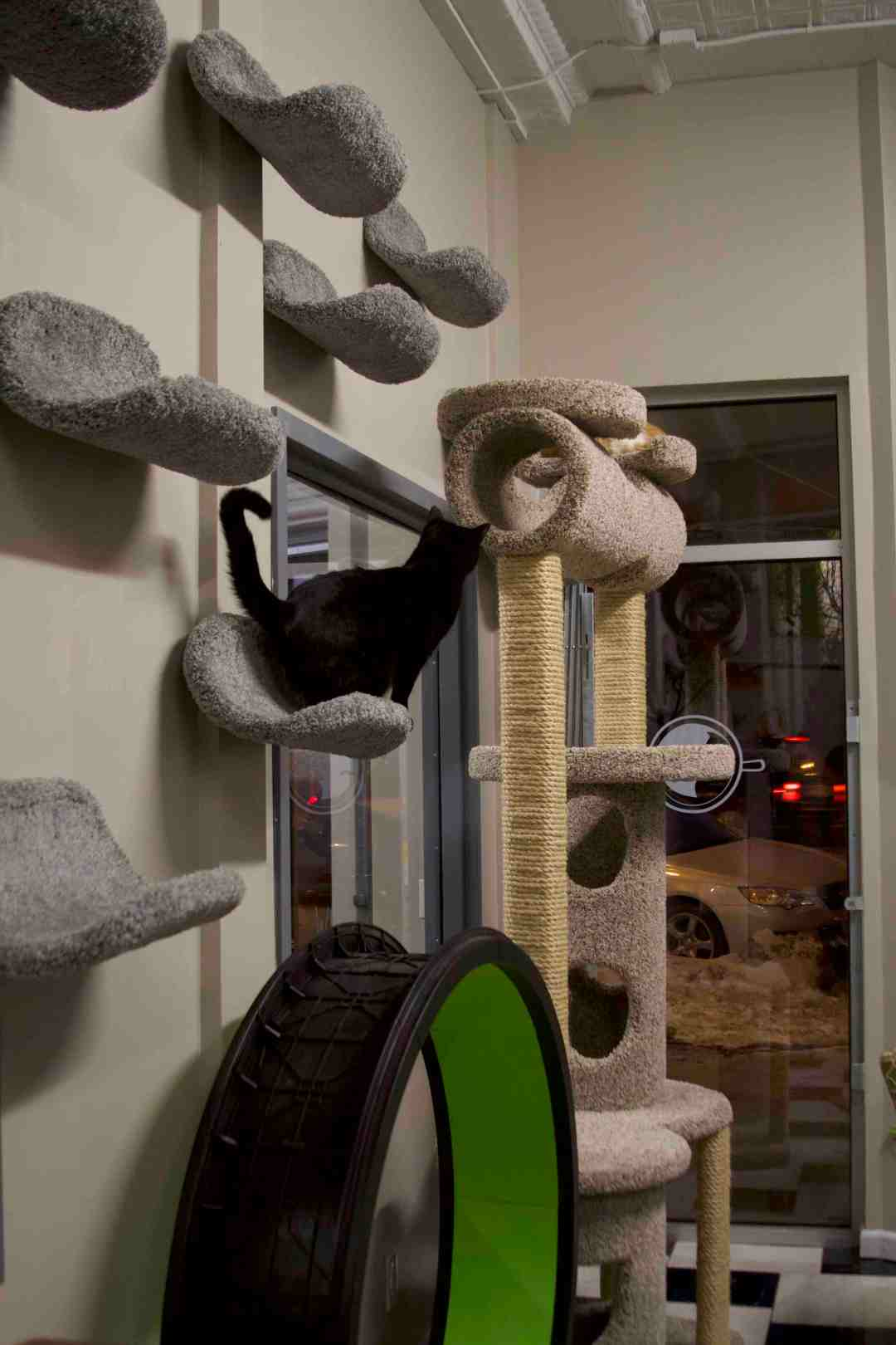 Reaching New Heights in The Cafe Meow