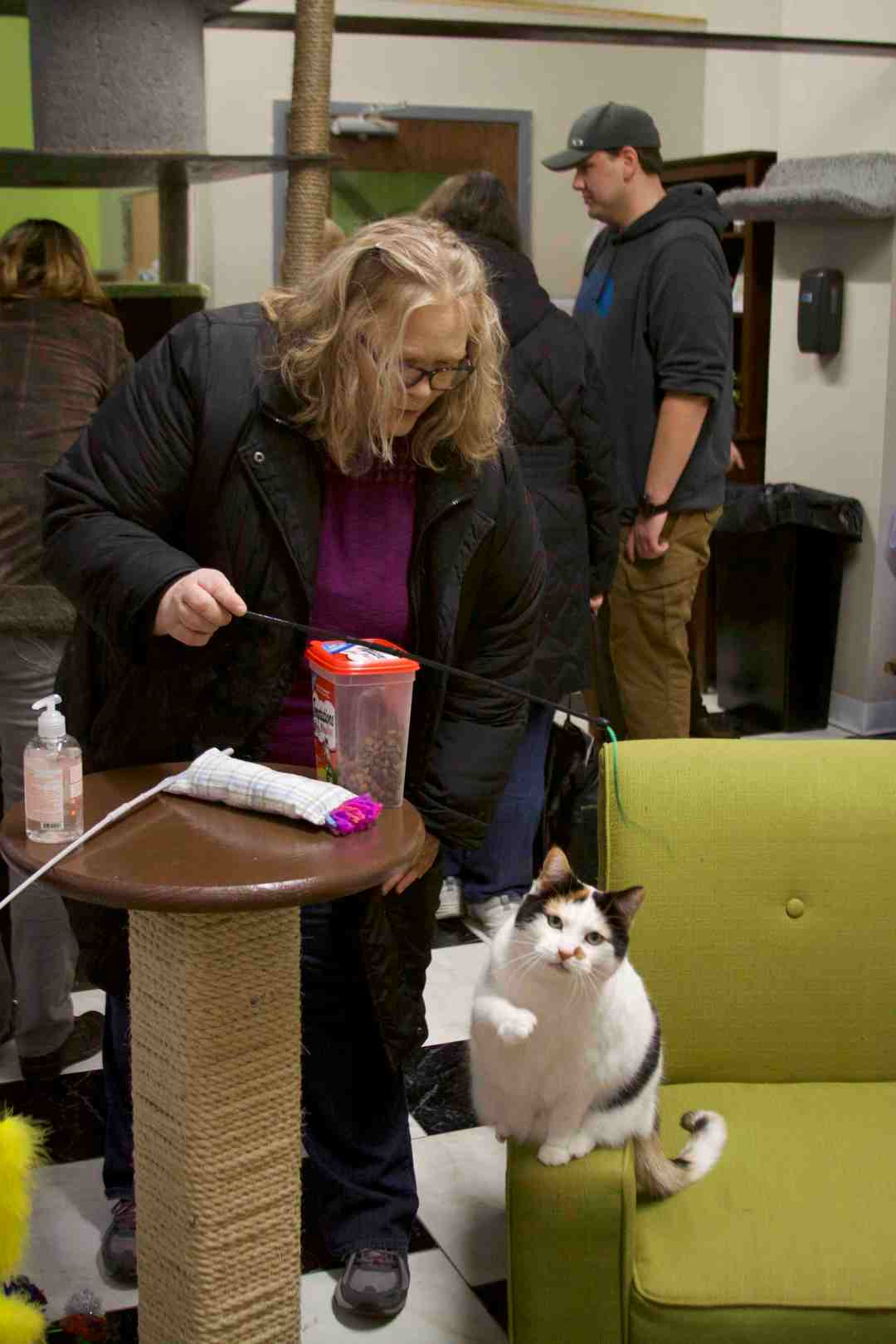 A Playful Cat at The Cafe Meow