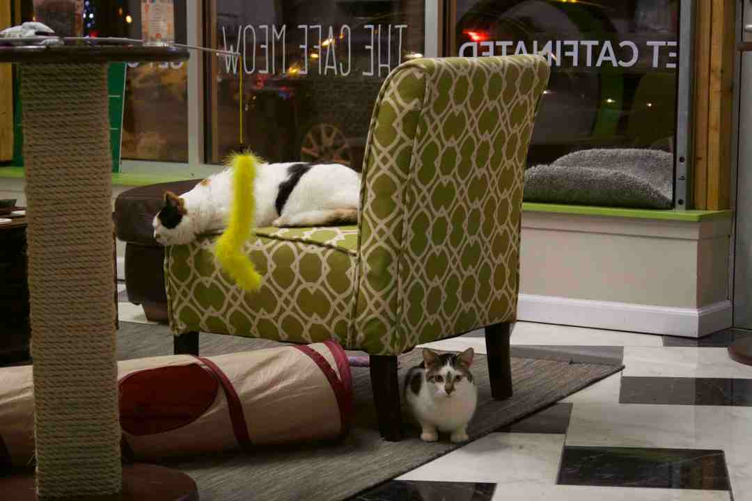 Furniture Isn't Just for People in the Cat Room