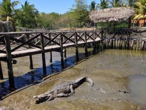 Nuevo Vallarta / Flamingos: El Cora Crocodile Sanctuary