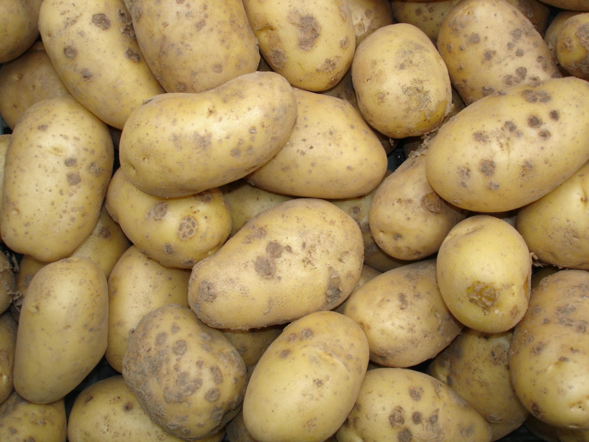 Russet Potatoes arrive in Puerto Vallarta, Mexico