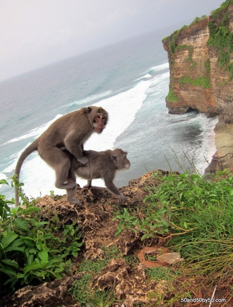Macaque monkey sex - it's a Discovery Channel moment at Ulu Watu, Bali Indonesia| Photo by Todd L. Cohen, Visit50.com