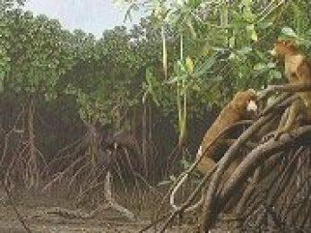 Manglar de la isla de Borneo