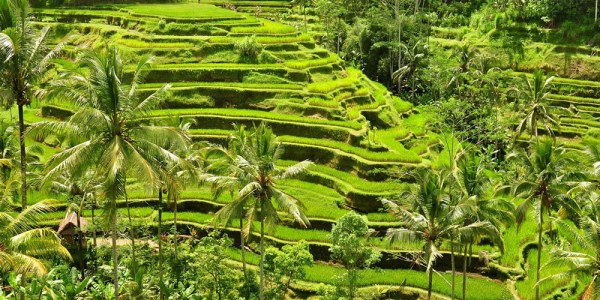 tegalalang-rice- terrace