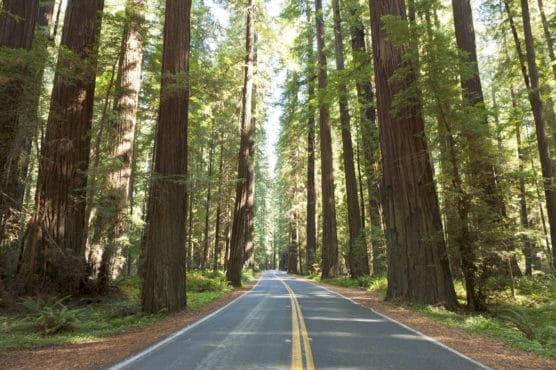 If you spend a week in Northern California you must see Humboldt Redwoods Park