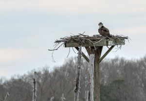 Osprey Festival April 12-14