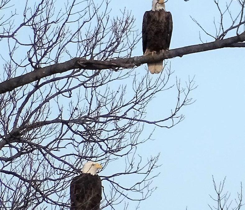 Eagle Tours