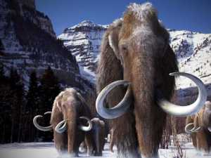 WoollyMammoths