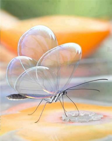 BubbleWingButterfly