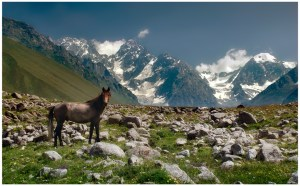 CaucasusHorse