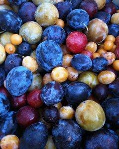 40-fruitsTreeBounty