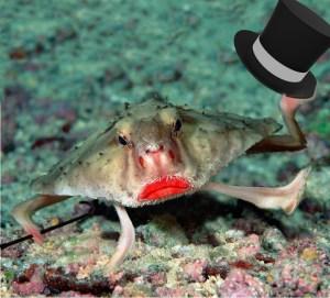 Batfish10