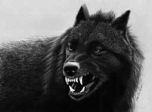 pencil_drawing_black_wolf_by_jasminasusak