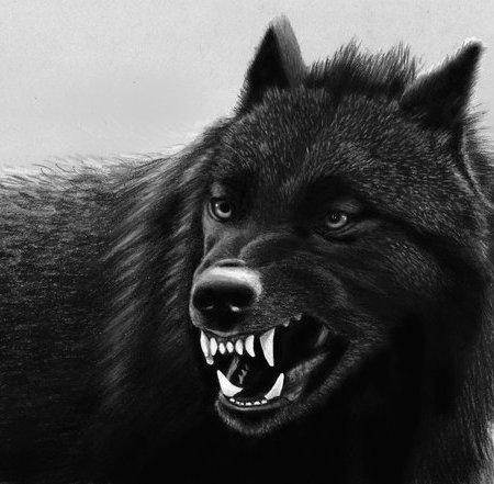 pencil_drawing_black_wolf_by_jasminasusak